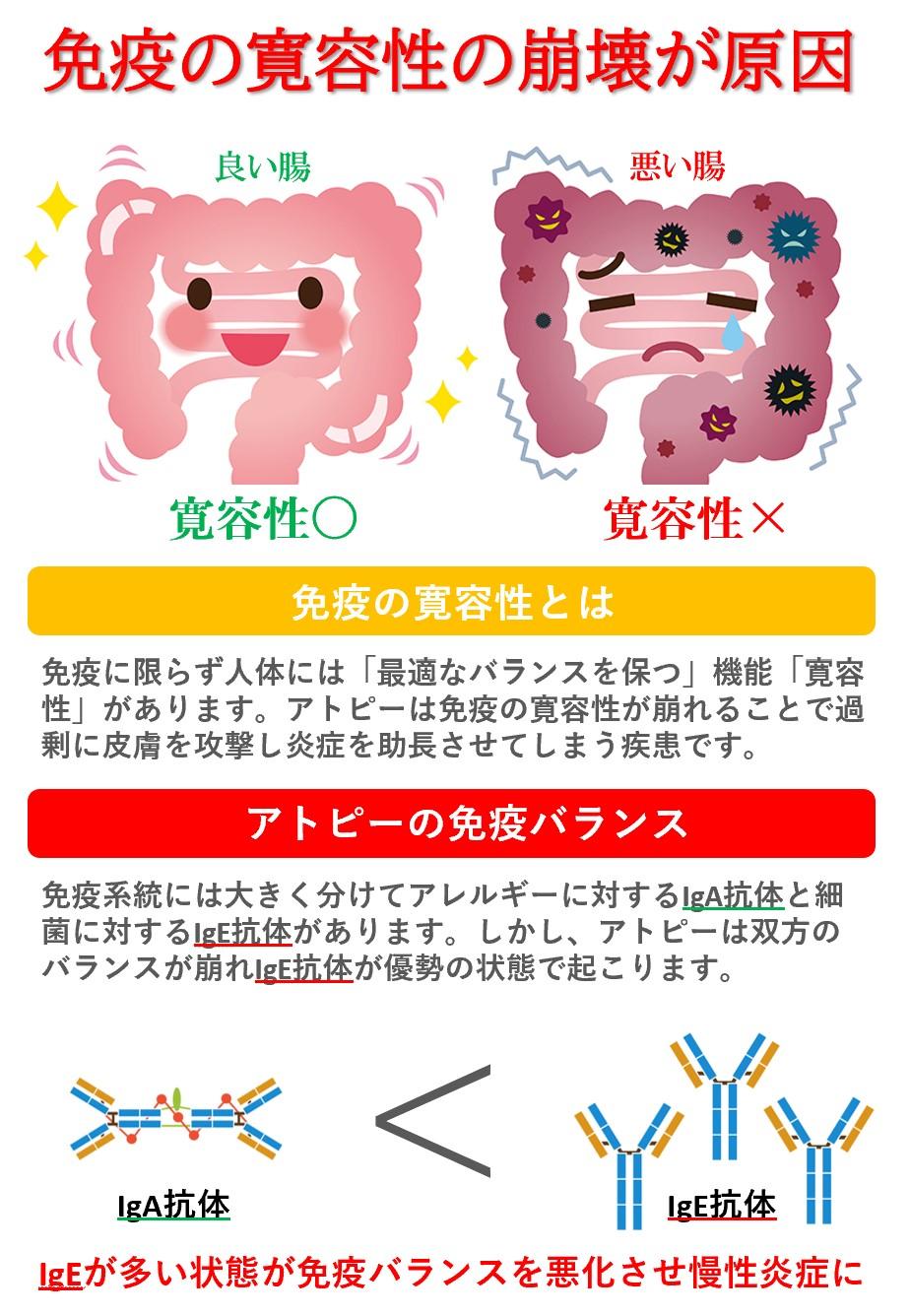 免疫バランスの悪化=寛容性の崩壊。アトピーのメカニズムはIGA抗体とIGE抗体のバランスが崩れること。