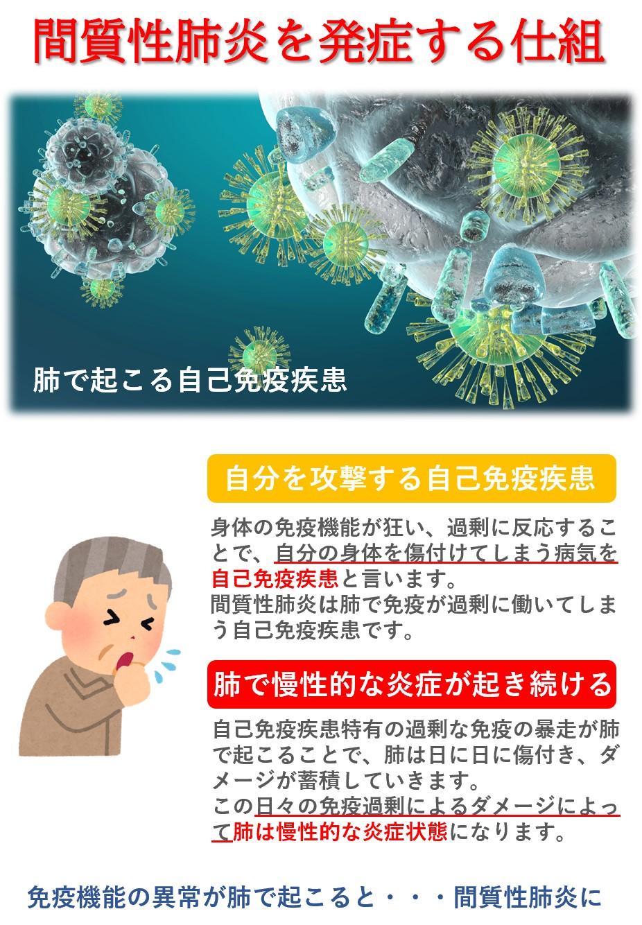 間質性肺炎は免疫機能が暴走する自己免疫疾患で肺の間質で慢性炎症が起こり酸素の吸収率が低下する病です