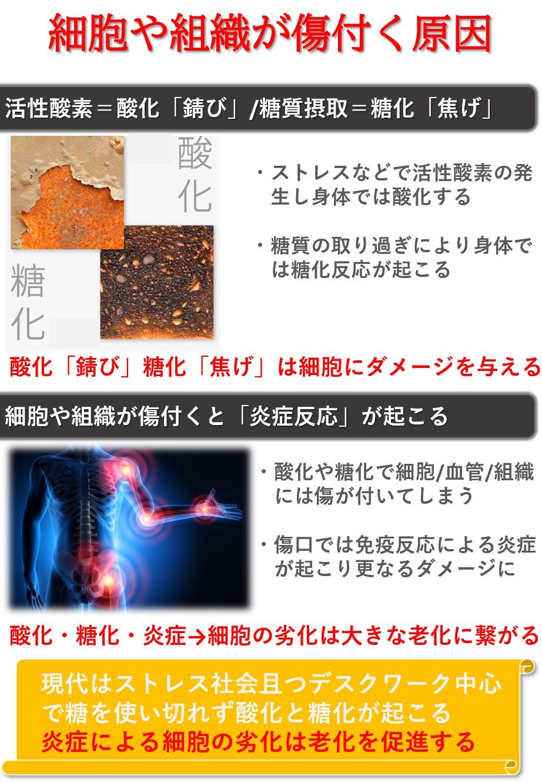 酸化・糖化・炎症が細胞を傷付け老化を招く
